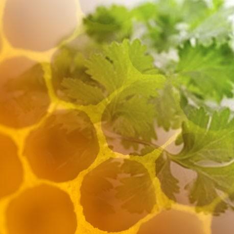 Miel de Cilantro