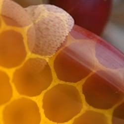 Miel de Encina