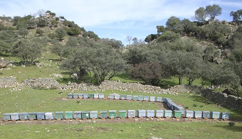 Colmenas en Sierra Morena